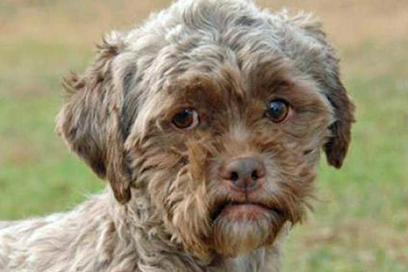 ... našiel pri obhliadke domu kúpeného v dražbe 14 psov žijúcich v  otrasných podmienkach v priestoroch domu. Na miesto privolal Slobodu zvierat  i políciu da736d6ce8a